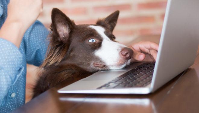 Peluqueria-canina_sito-online