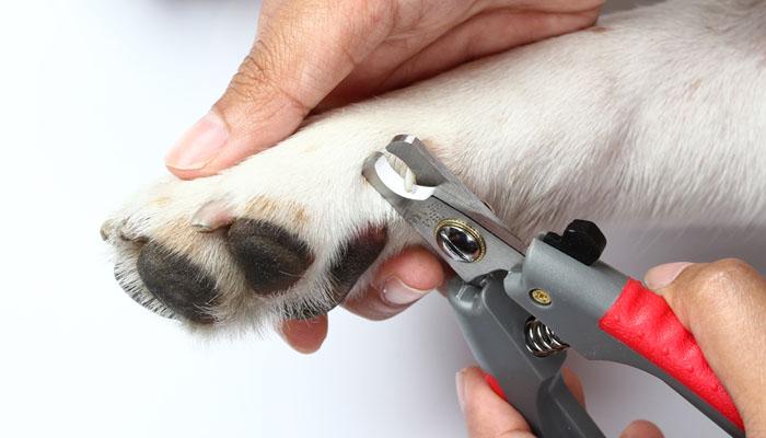 Peluqueria-canina_tosatura-cane